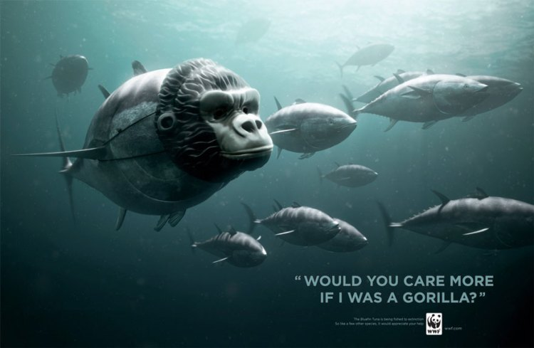 El atún de aleta azul. ¿Te importaría más si yo fuera un Gorila?