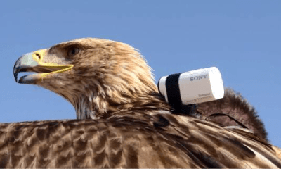 Dharsam zboara cu Sony Action Cam Mini