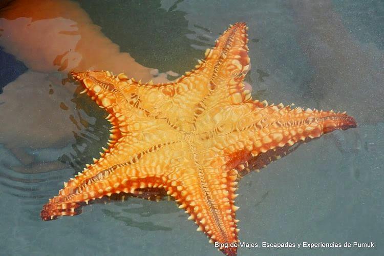 La Playa De Las Estrellas En Bocas Del Toro