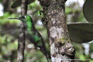 Hay gran variedad de colores entre estas pequeñas aves acrobáticas