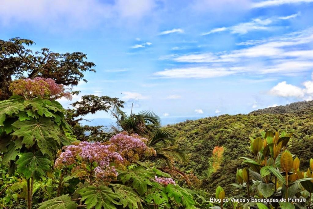 Mirador de la Ventana en Montverde. Vista hacia el océano Pacífico