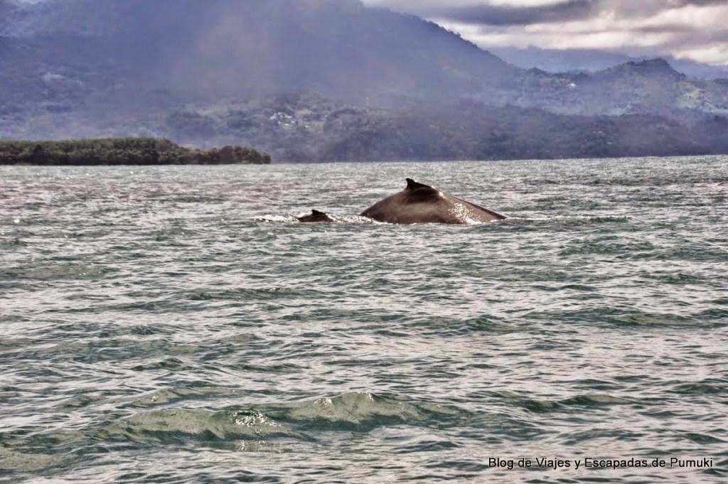 Ballena con cría entrando en el agua en Costa rica
