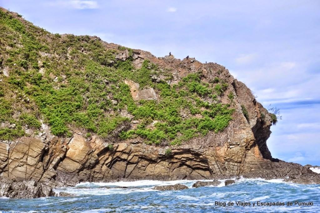 Nidos de aves en Isla Ballena, Costa Rica