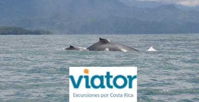 Excursiones por Costa Rica con Viator