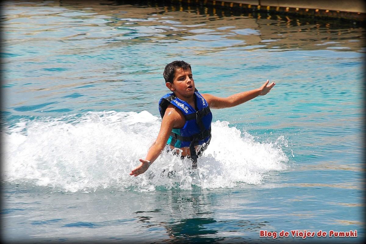 Baño con delfines y food push en parque Xcaret en Riviera Maya