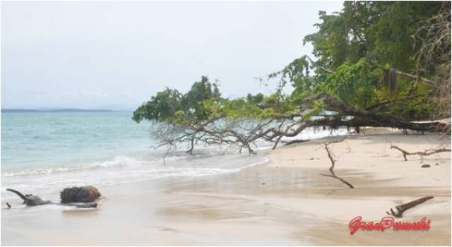 Isla Zapatilla ha sido escenario de reality shows. Es una isla desierta y paradisiaca. Mas en Blog de Viajes. Bocas del toro en Panamá