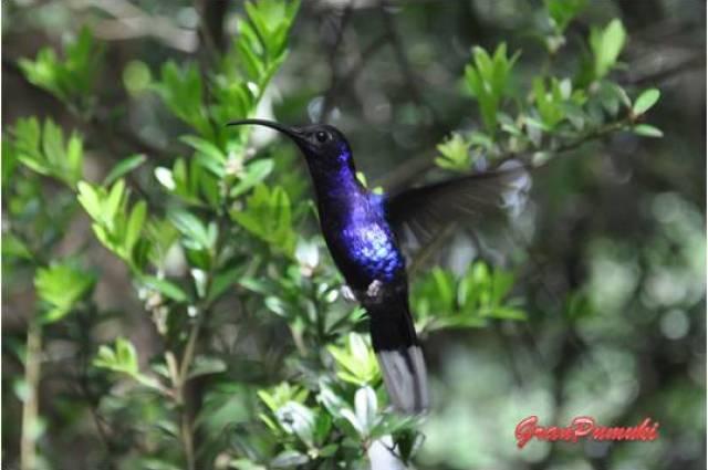 En monteverde se puede interaccionar con colibries en un entorno natural como es el Bosque Nuboso. Léelo en el Blog de viajes con niños en Costa Rica