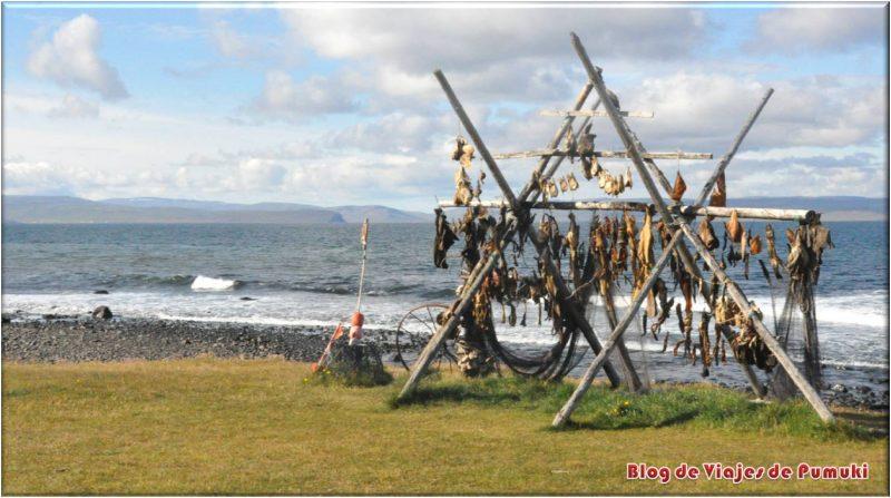 Secaderos de pescado en Islandia