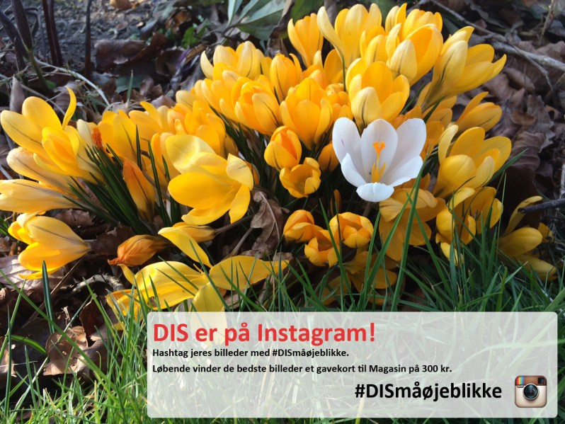 Start på DISsmåøjeblikke_facebookpost