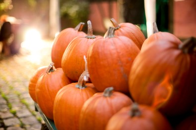 Halloween-græskar-dis-værtsfamilier