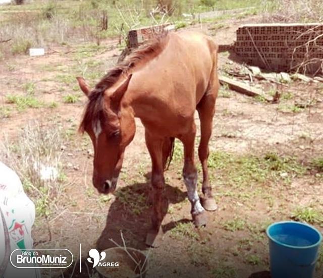 Morre cavalo abandonado que motivou campanhas em Santa Cruz do Capibaribe