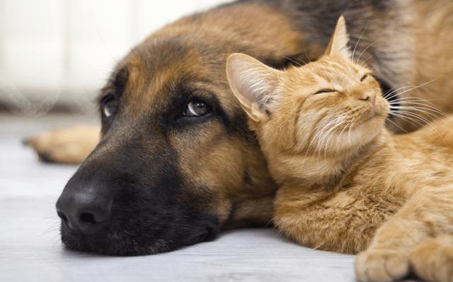 Instituto Quatro Patas realizará mais um evento de adoção de animais em Caruaru