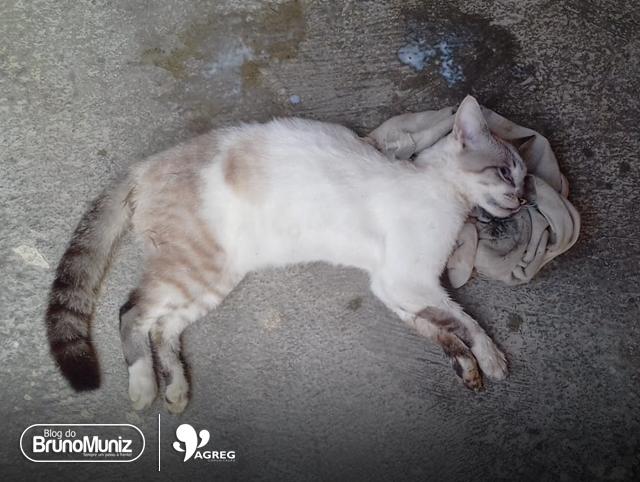 Envenenamento de pets vira caso de polícia em Santa Cruz do Capibaribe
