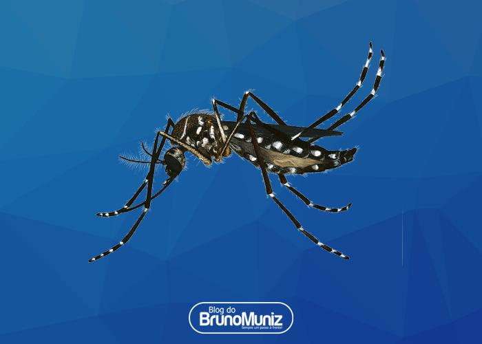 Após dengue, zika e chikungunya, UFRJ descobre novo vírus transmitido pelo Aedes aegypti, o mayaro