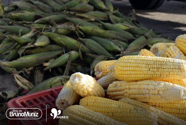 """""""Mão"""" de milho é comercializada a R$ 25 em Santa Cruz do Capibaribe"""
