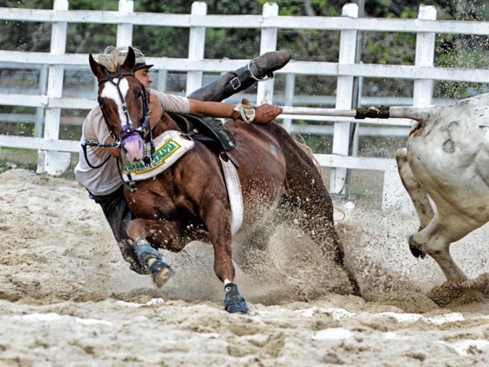 Lei que regulamenta vaquejada divide opiniões entre criadores de cavalos e defensores dos animais em Pernambuco