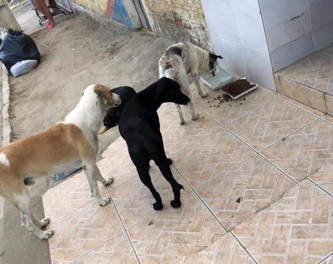 Após notificação de mulher pela prefeitura, cresce relatos de pessoas que alimentam animais abandonados nas ruas