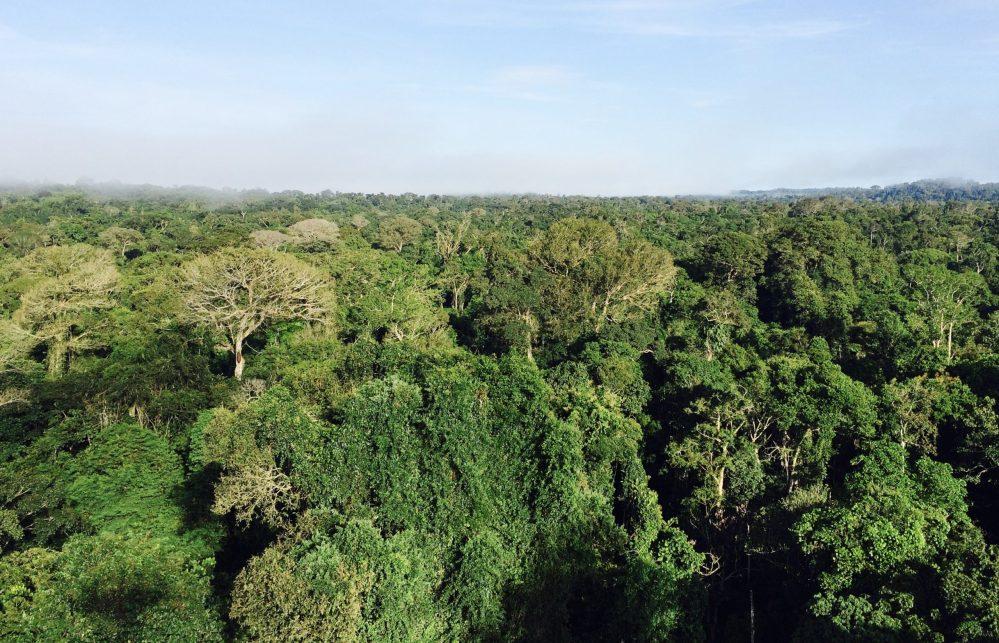 Brasil tem 3.299 espécies de animais e plantas ameaçadas