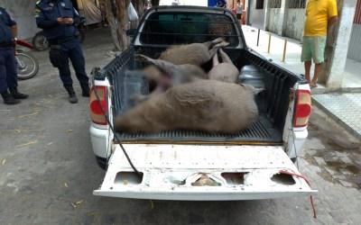 Cinco capivaras são encontradas mortas às margens do Rio Ipojuca, em Gravatá