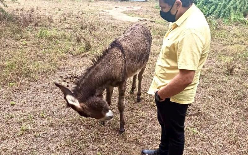 Mais um animal em situação de vulnerabilidade é resgatado em Santa Cruz do Capibaribe