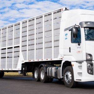 Contran altera altura máxima de caminhões boiadeiros