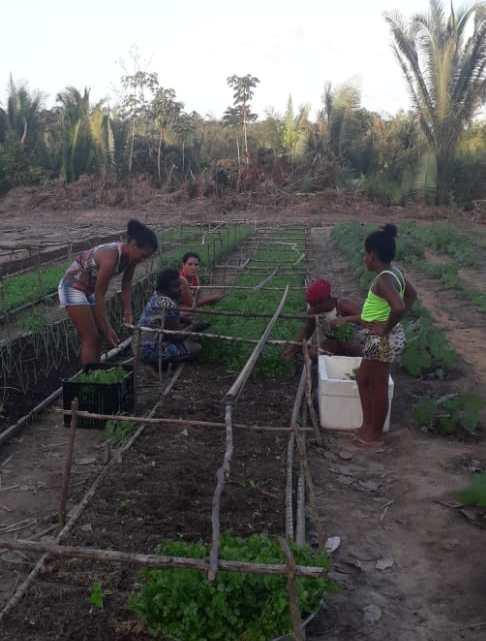 Agerp Regional Pinheiro participa da primeira colheita de hortaliças no Quilombo Marajá, zona rural de Bequimão