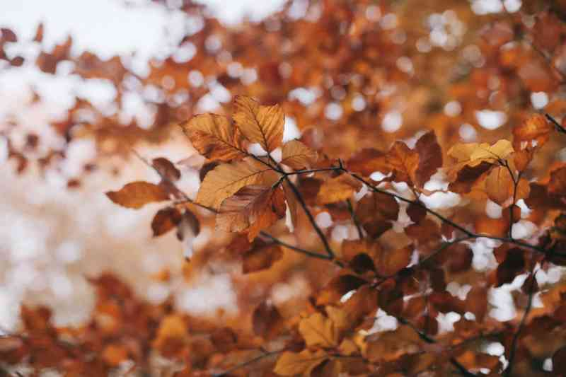 brown leafed tree selective focus photography