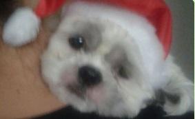 bloguinho natal 2015