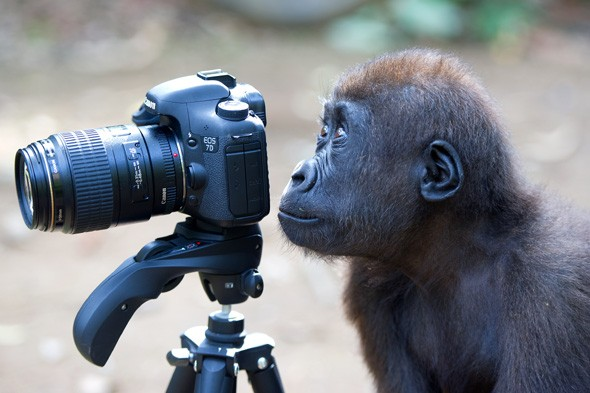 Any-Monkey-With-a-Camera-Thinks-He-is-a-Photographer