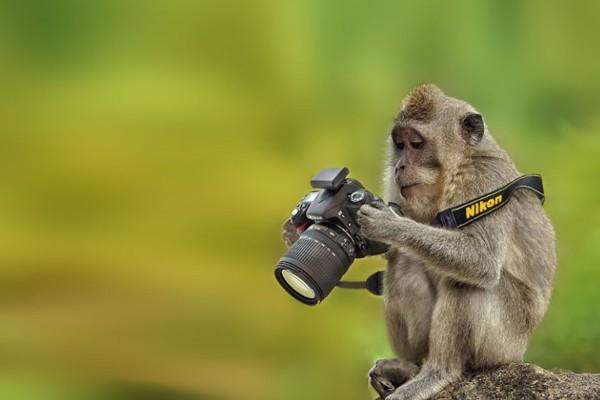Este-mono-analizando-las-fotos-600x400