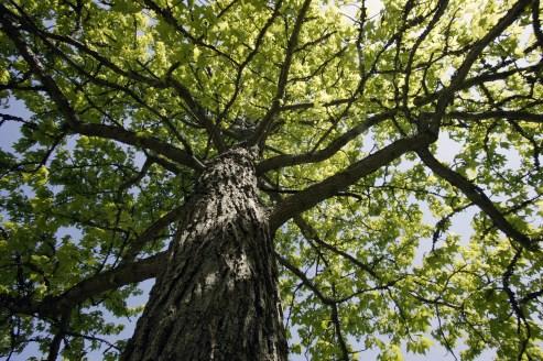 summer_tree