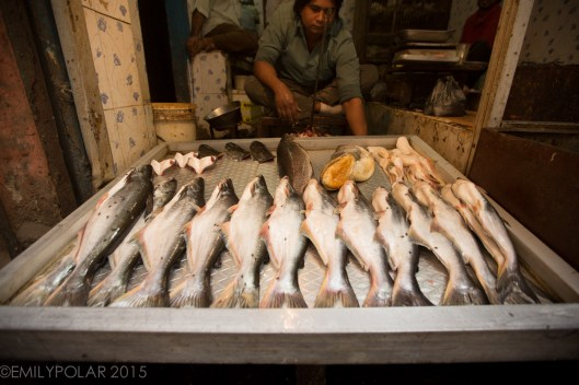 Big white fish for sale at market in Old Delhi, India.