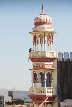 Monkey sitting on top of tower in Pushkar, India.