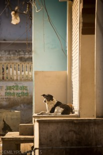 Street dog chilling on a porch in the morning light along a dusty street in Pushkar.