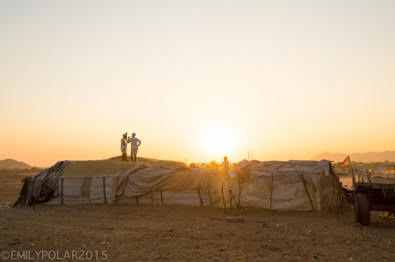 Rajastani men raking pile of grass to feed camels and animals at sunset in Pushkar.