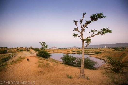 Pushkar_141125-227