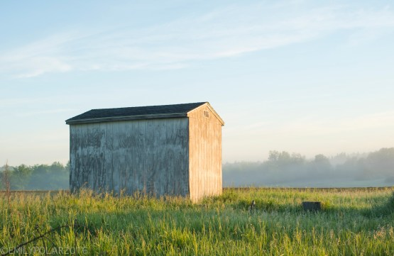 Wooden shed stands in the cool blue and foggy sunrise morning in the rural country lands of Wisconsin.