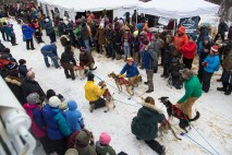 Musher Lines Up His Team