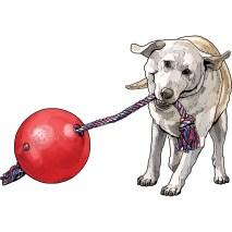 Tuggo Dog Toy #47724