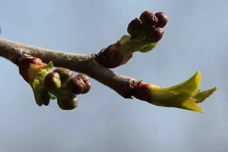 thumbnail-les-saisons-le-printemps