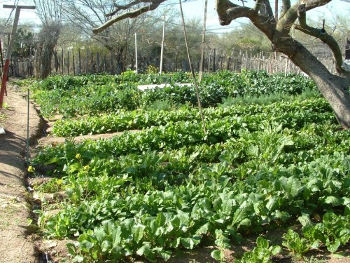 La Oeste garden 3