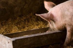 Pig-Trough