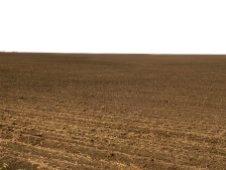 Після збирання зернових в липні 2019 року до кінця квітня 2020 року це поле виглядало ось так — просто гола земля.