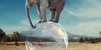 Elephant Bubble Balance Surreal  - DimaDim_art / Pixabay