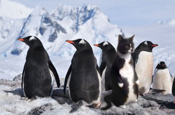Imposter Syndrome - the cat amongst the pengiuns
