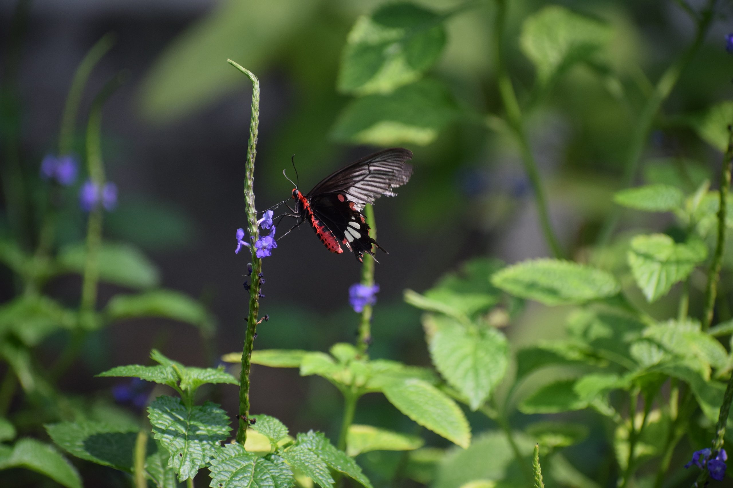 Beautiful real butterfly images ramoji