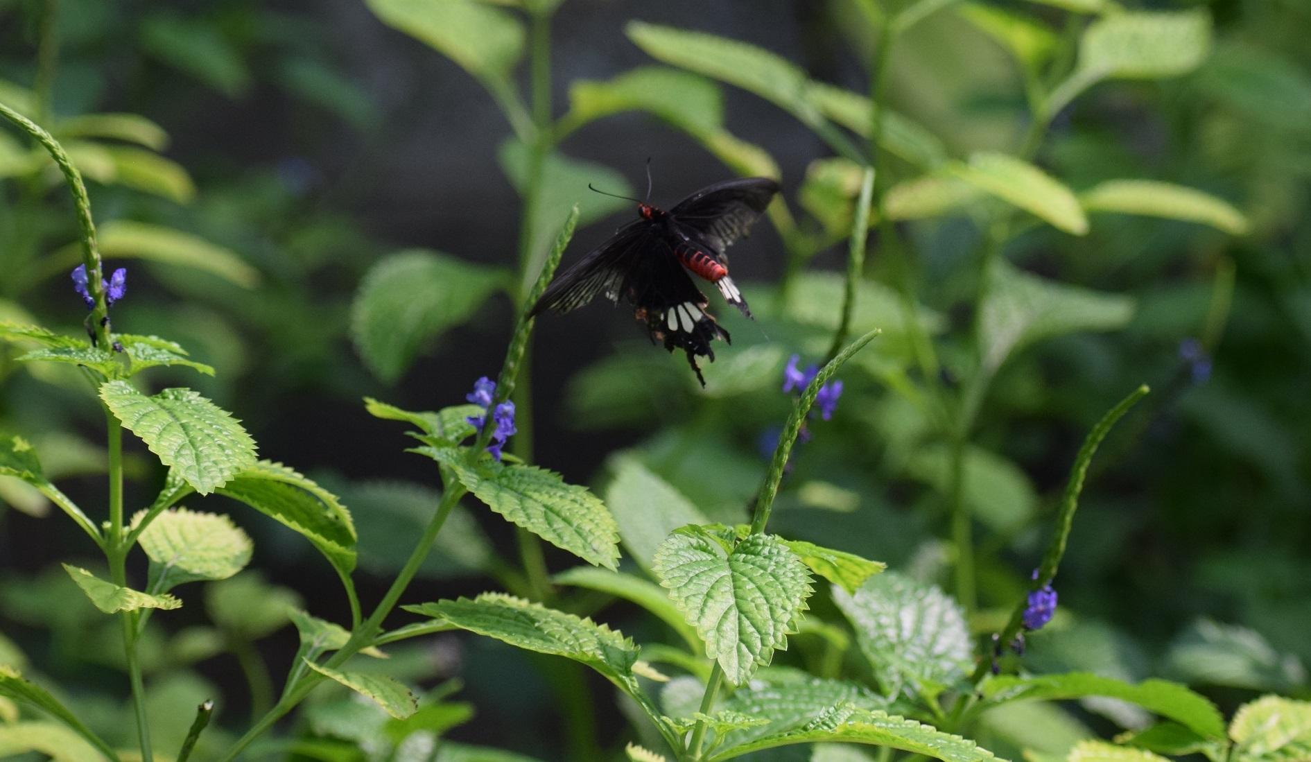butterfly DSLR photos