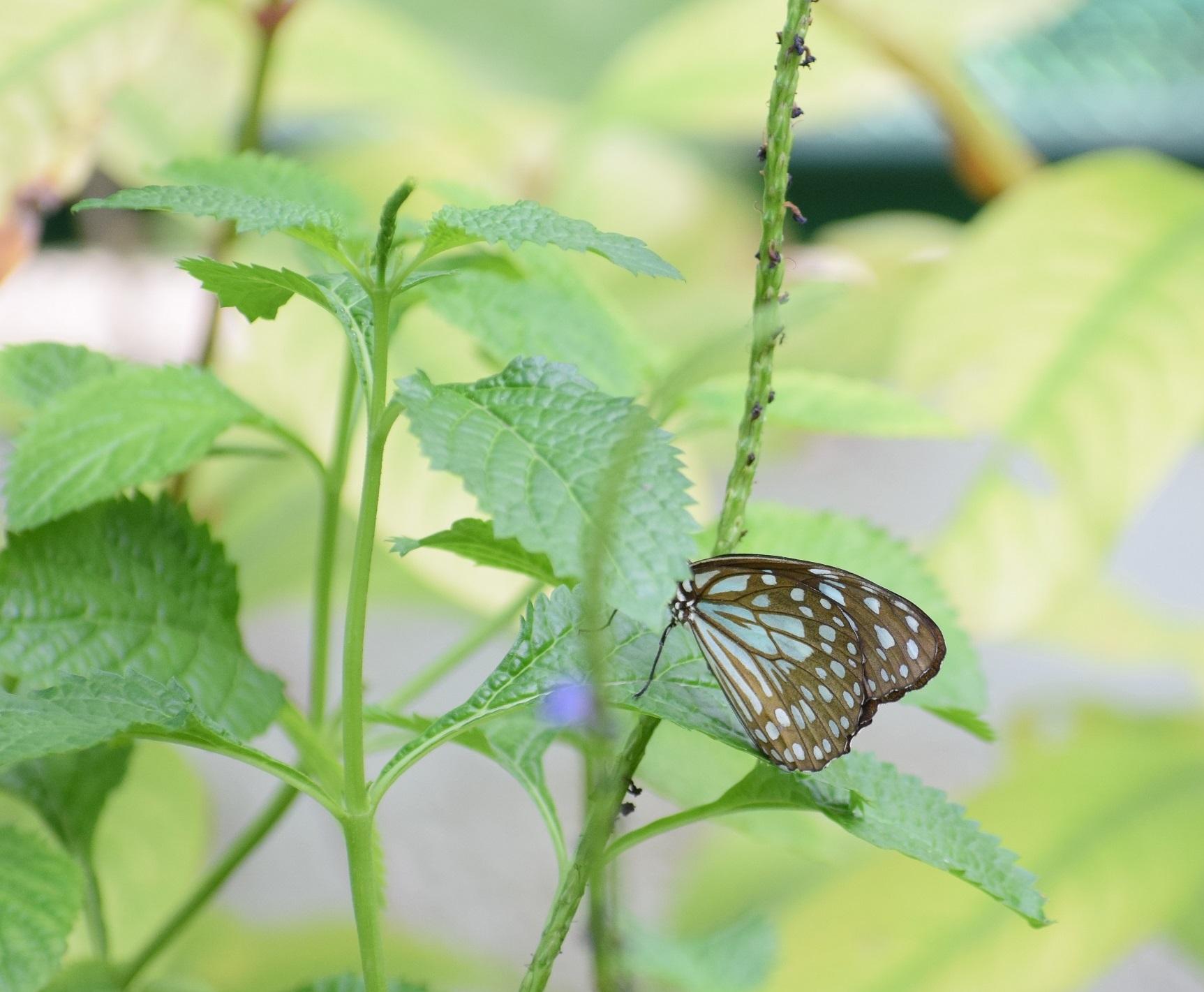Ramoji butterfly park