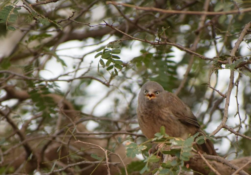 Dandoba Hill birds photography 2 Dandoba hill station Information, Beautiful place in Sangli.
