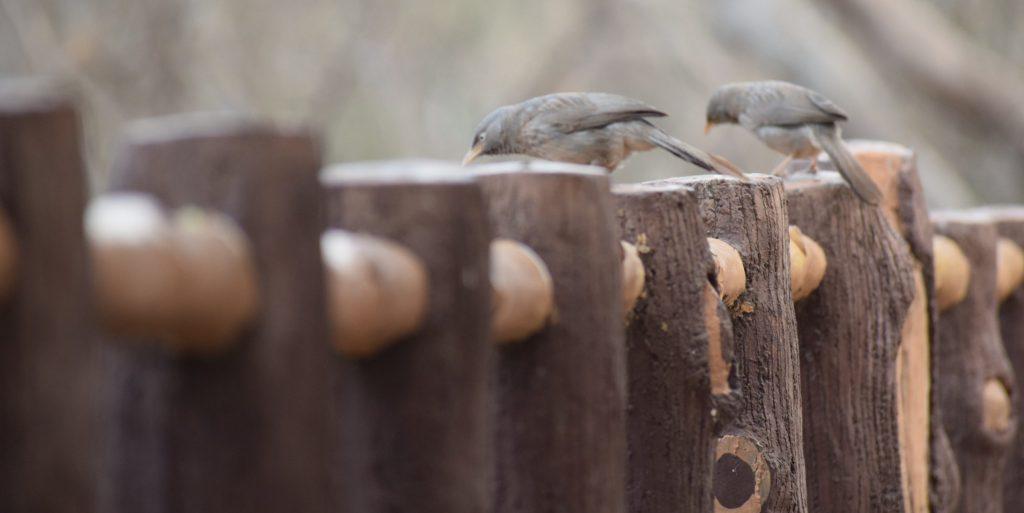 Dandoba Hill birds photography 3 Dandoba hill station Information, Beautiful place in Sangli.